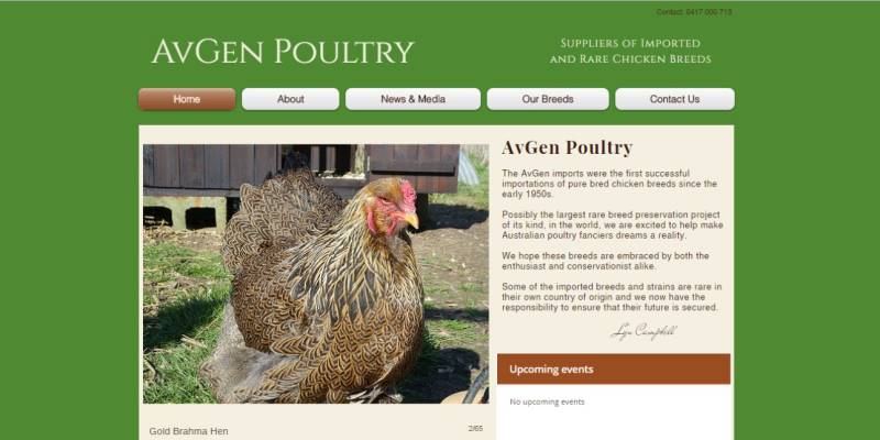 Avgen-Poultry-Gusto-Marketing